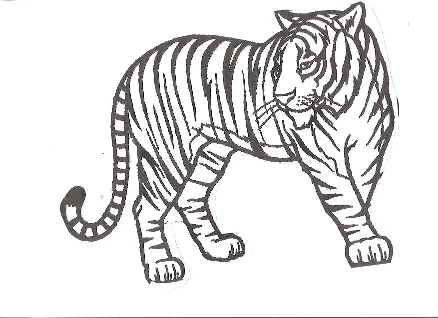 Outline Of Tiger Coloring Home