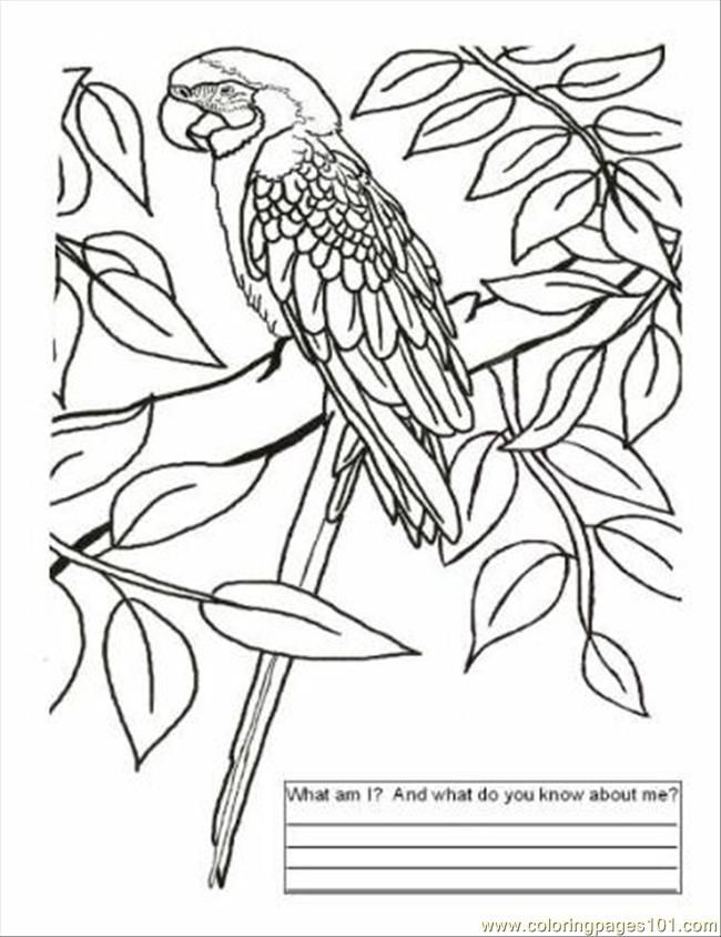 brazil carnival coloring pages - photo#21