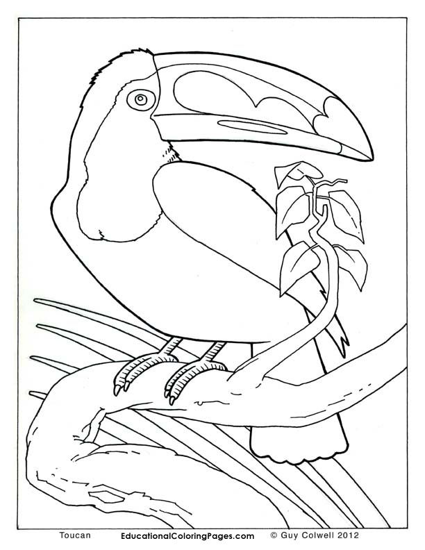 - Realistic Coloring Pages - Coloring Home