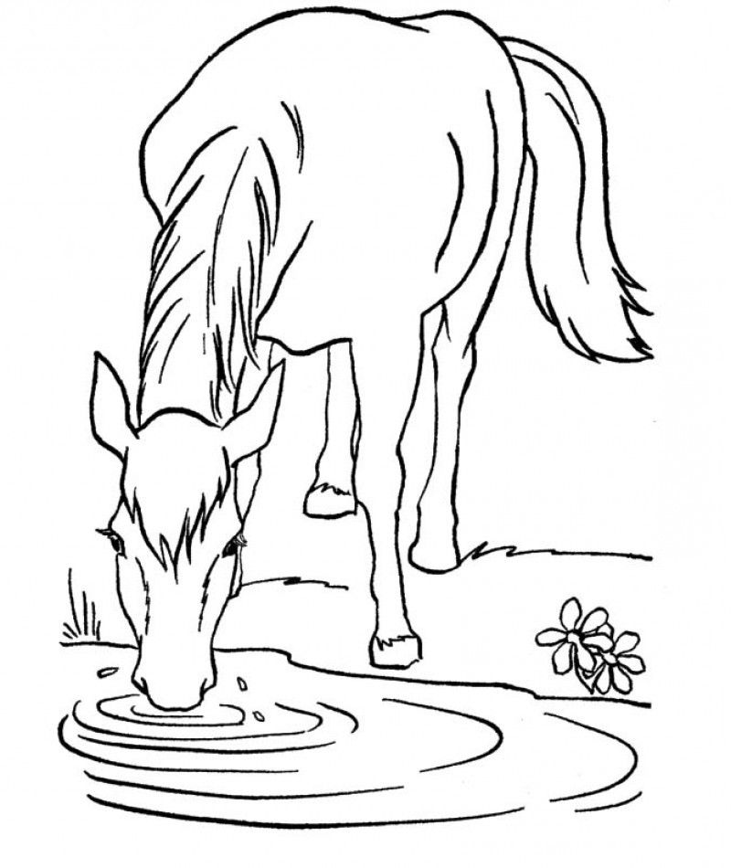 Newt coloring page az coloring pages for Newt coloring pages