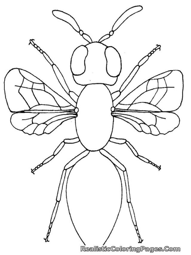 Insect Coloring Pages Free Coloring