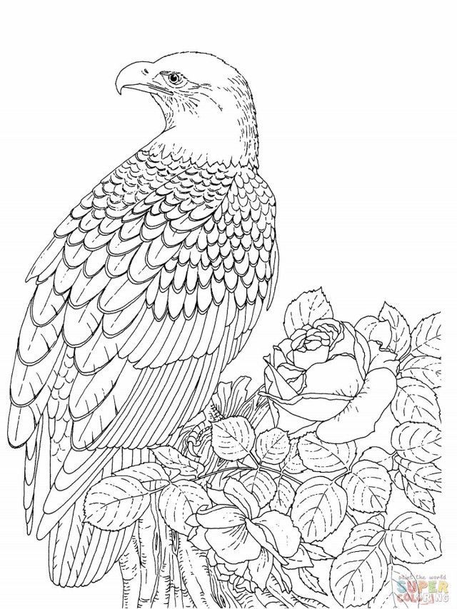 Bald Eagle Coloring Page Jpg 177564 Coloring Pages Of Eagles - Coloring Home