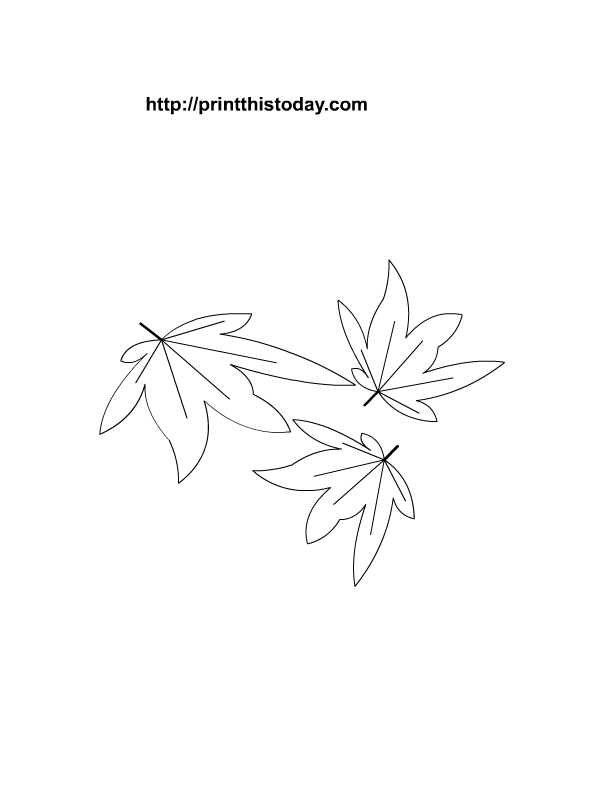 Maple Leaf Printable  Coloring Home