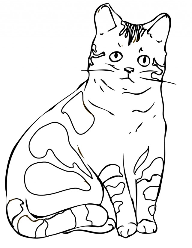 Realistic Cat Coloring Pages - AZ Coloring Pages