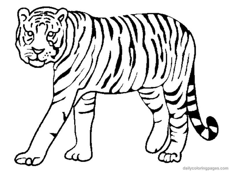 Animal Coloring Baby Tiger Pages