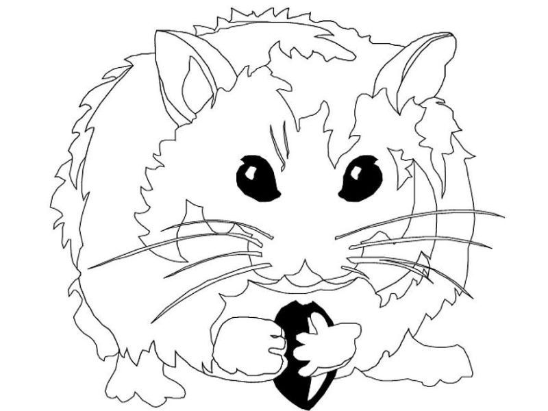 Coloring Page Hamster Coloring Home