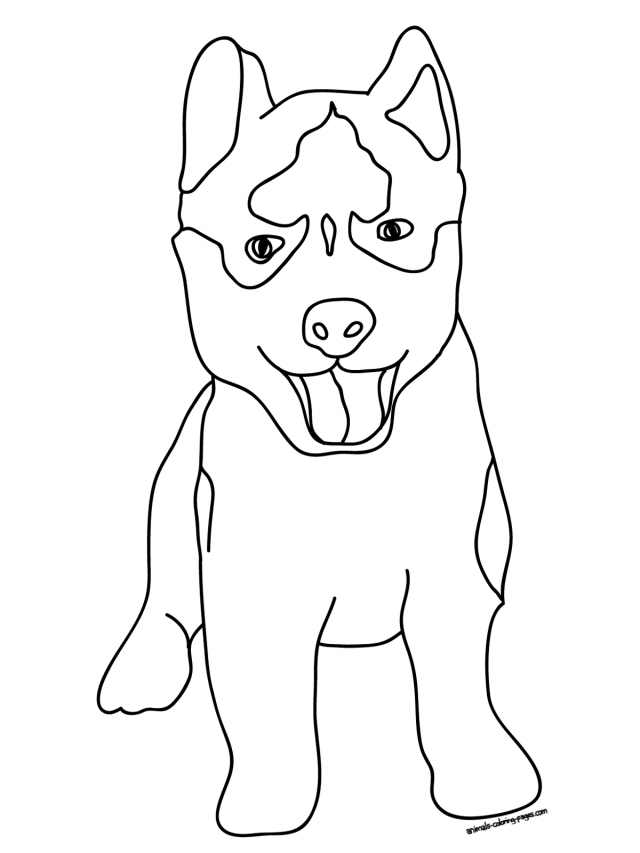 Husky Dog Realistic Coloring Pages Printable | 853x640