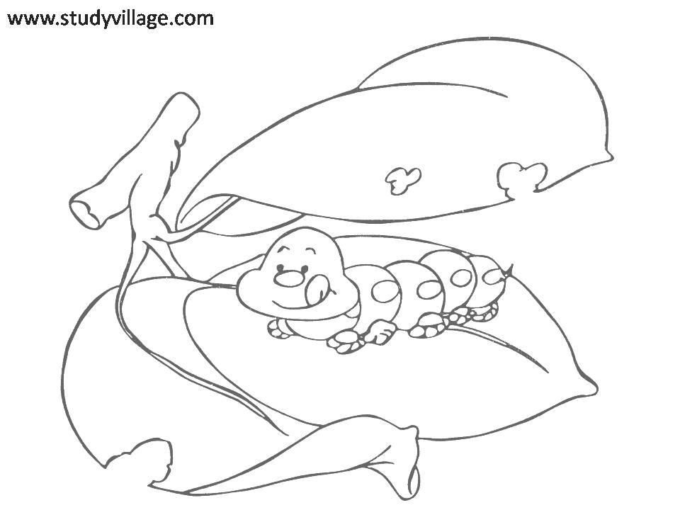 Free Insects And Bugs Coloring Pages