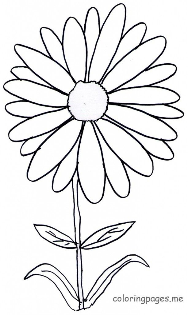 Bouquet of daisies coloring pages coloring pages for Daisy coloring page
