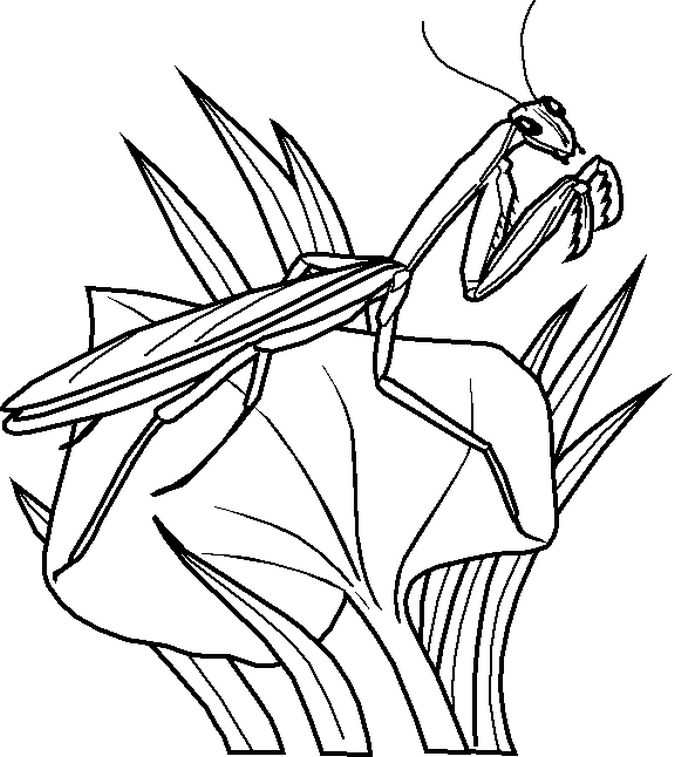 Insect Coloring Pages Online
