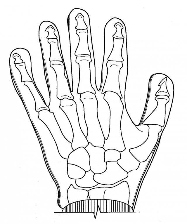 human organ systems coloring pages - photo#24