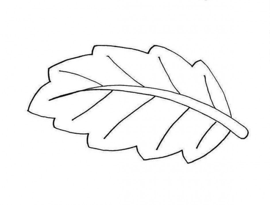 Colouring Pages Of Leaves Coloring Home