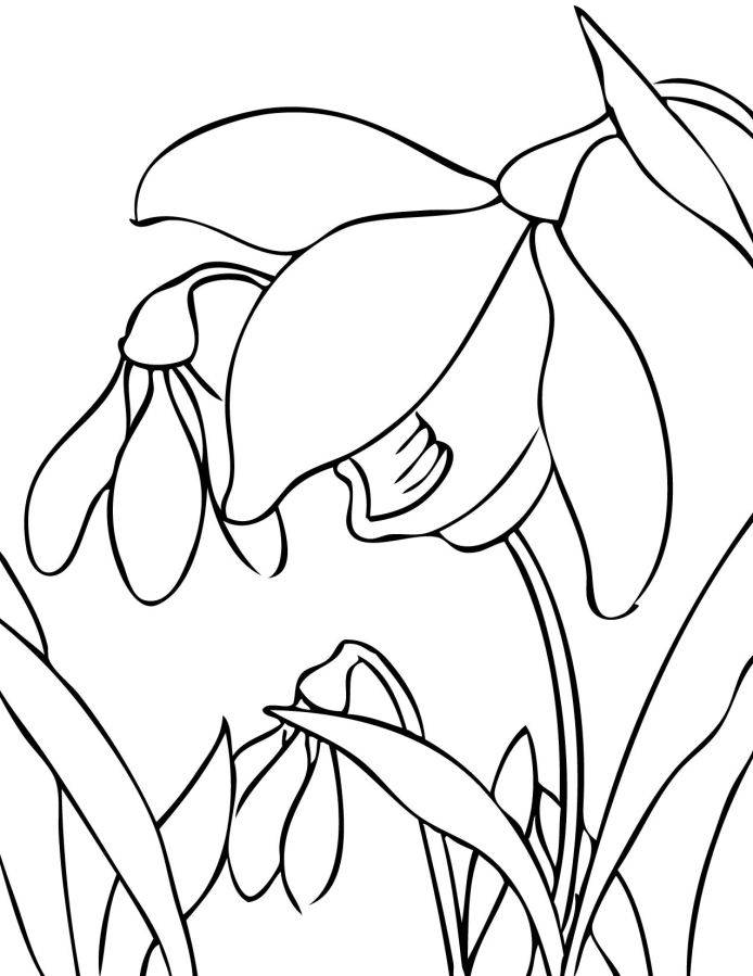 Spring flower coloring sheets coloring home for Coloring pages spring flowers