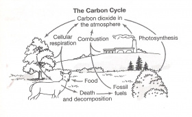 carbon cycle coloring page