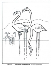 Birds Book One - Educational Fun Kids Coloring Pages and Preschool ...