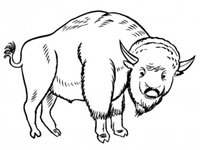 Bison Coloring Pages For Kids | Realistic Coloring Pages