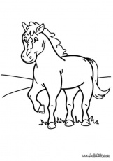 Coloring Page Pony - Coloring Pages for Kids and for Adults