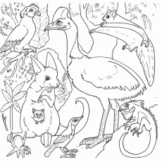 Australian Animals Colouring Pages Brisbane Kids Coloring Home