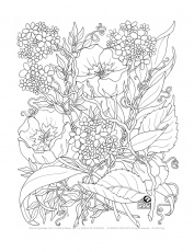 Coloring Pages for Adults - Free Large Images