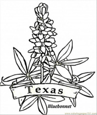 texas symbols coloring pages