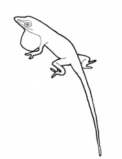 Anole Lizard Coloring Pages | 99coloring.com