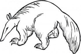 Anteater Coloring Page Coloring For Kids Coloring Download 8761