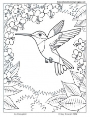 Nature coloring pages : Hummingbird coloring pages for kids | Free