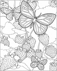 EXPOSE HOMELESSNESS: COLORING BOOK BUTTERFLY (5) FOR OUR HOMELESS