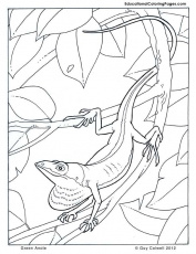 all coloring pages | Animal Coloring Pages for Kids