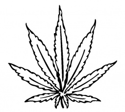 pot leaf coloring page