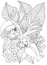 Tropical Flowers - Coloring Pages for Kids and for Adults