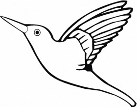 Download Flying Parrot Bird Coloring Page Or Print Flying Parrot