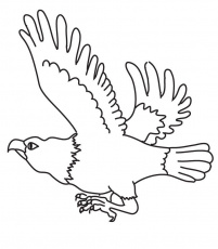 Free eagle Coloring Pages For Kids | Coloring Pages