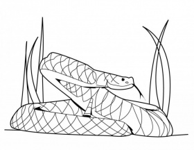 viewing gallery for king cobra coloring pages anaconda coloring