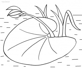 lily pad coloring pages