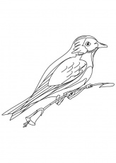 Mountain bluebird coloring page | Download Free Mountain bluebird