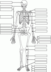free human anatomy coloring pages