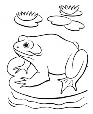 Frog in the Pond Coloring Page: frog-in-the-pond-coloring-pages