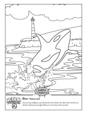 orca Colouring Pages (page 3)