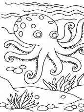 octopus coloring page for kids funny animals jumbo pages