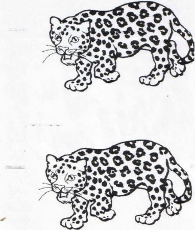 baby jaguar coloring pages - jaguar coloring page animals town free jaguar color