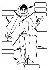 human body coloring page