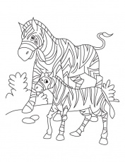 Zebra with its Baby Coloring Pages for Kids | Coloring