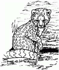 Cheetah Cub Coloring Pages | Coloring