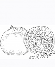 Red Pomegranate Seeds Coloring Pages Picture | Fantasy Coloring Pages