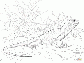 Common Collared Lizard coloring page | Free Printable Coloring Pages