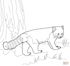 Red Panda coloring page | Free Printable Coloring Pages