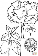 New Mexico State Tree Coloring Page Sketch Coloring Page