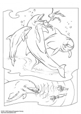Dolphins-coloring-page-6 | Free Coloring Page Site