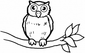 coloring page of an owl